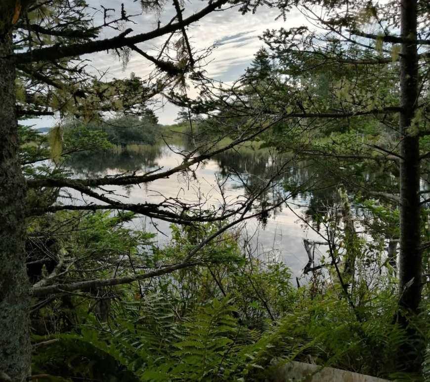 interlocking trees over a pond